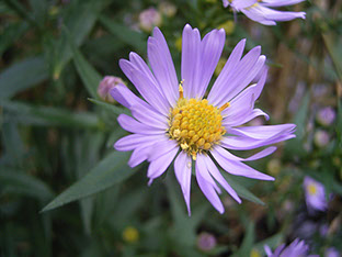 amcdvaugustdelaware valley chapter, appalachian mountain club, Beautiful flower